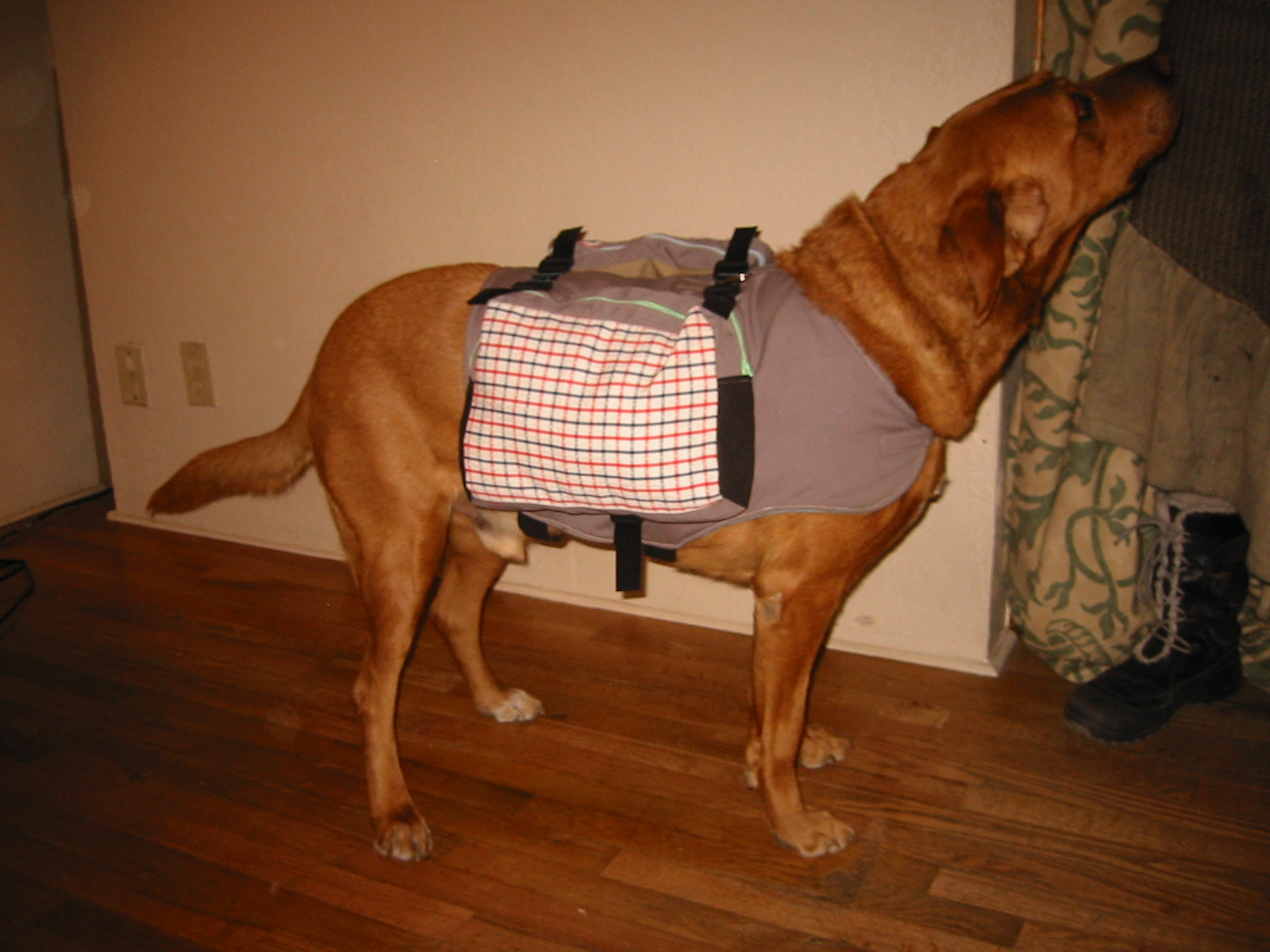 dog-packs